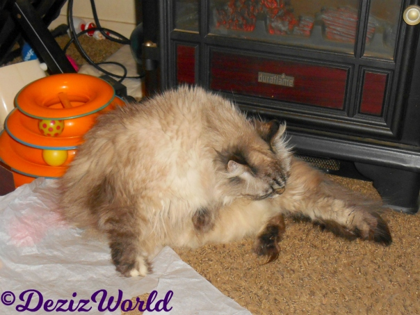 Dezi bathes while laying on the tissue paper in front of the fireplace