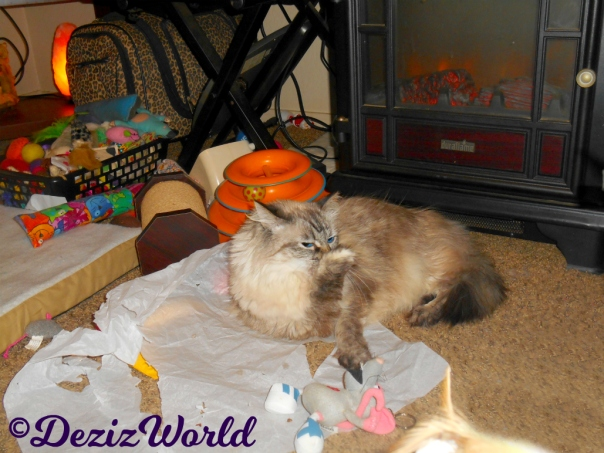 Dezi bathes while laying on tissue paper in front of the fireplace