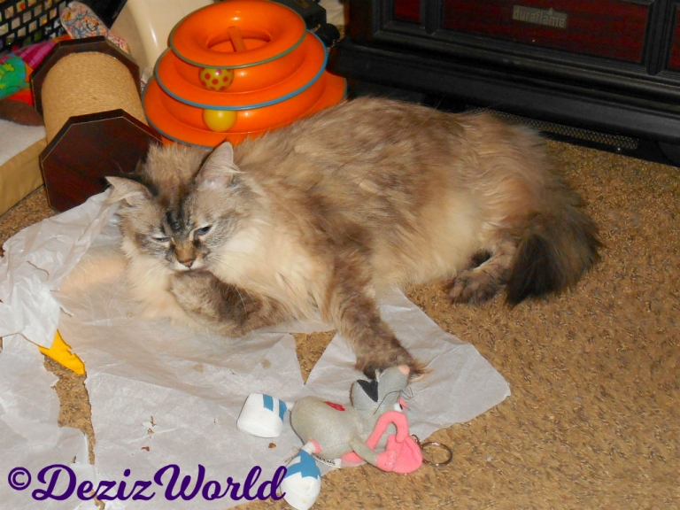 Dezi licks paw while laying on tissue paper