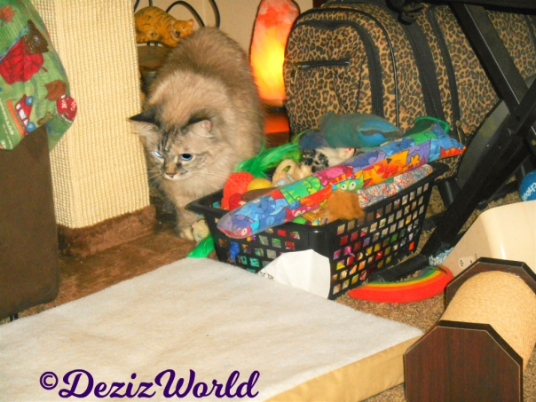 Dezi beside the toy box