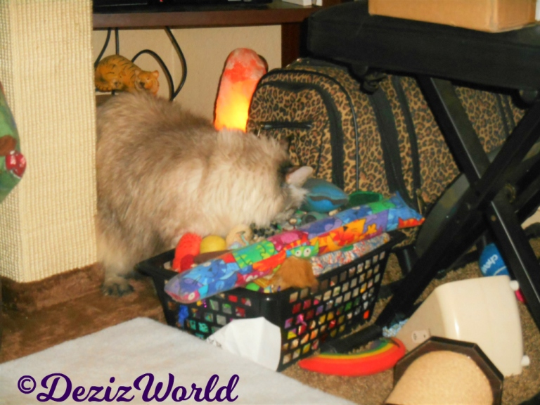 Dezi digs in toy box