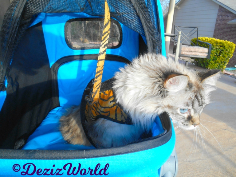 Dezi rests her head over the edge of the stroller while outside