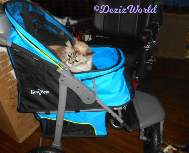 Dezi checks out the new Gen7 Jogger stroller gift from Cindy