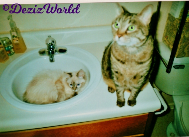 Dezi lays in sink while Lexi sits on the vanity and poses