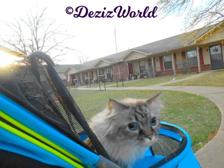 Dezi looks out of the side of the stroller while outside