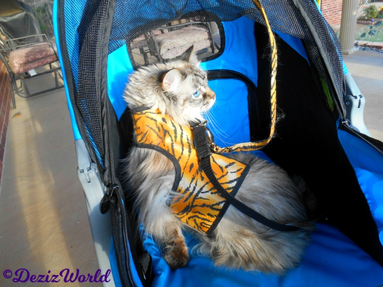 Dezi looks over her shoulder while in the stroller outside