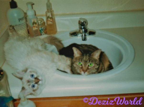 Lexi lays in bathroom sink while Dezi lays on vanity beside her