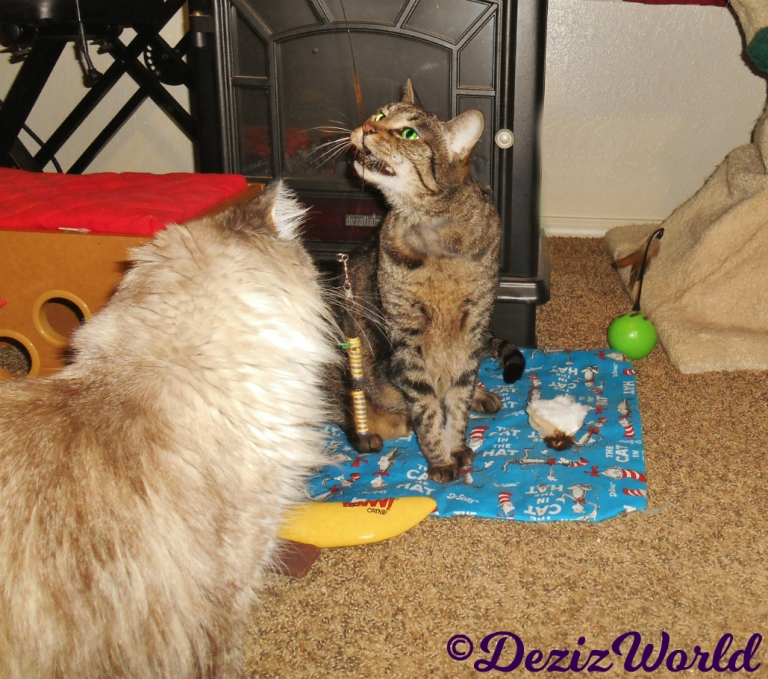 Lexi anhd Dezi play with the air wand toy
