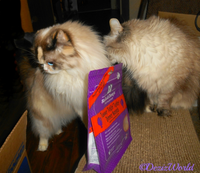 Dezi sniffs Raena while posing with Stella & Chewy's freeze dried turkey cat food