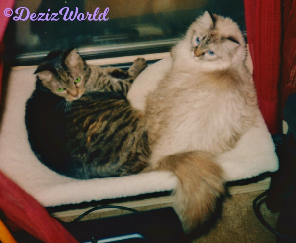 Lexi and Dezi lay together in the window perch