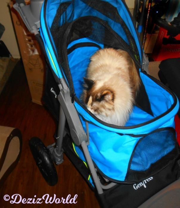Raena checks out new Gen7 Jogger stroller