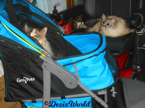 Dezi lays in wheelchair watching Raena in the new stroller