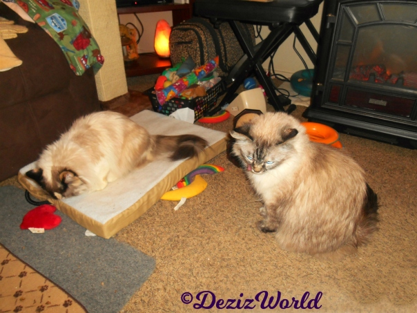 Raena sits on cat mat while Dezi sits in front licking lips