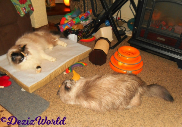 Raena lays on cat mat while Dezi plays with nip nanner