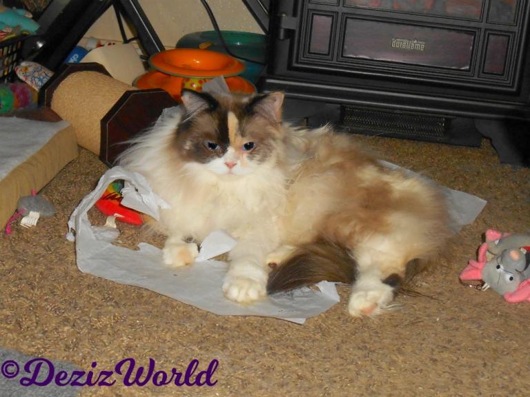 Raena lays on tissue paper