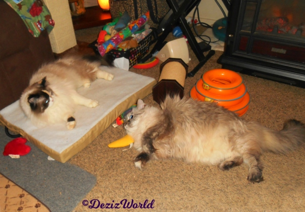 Raena lays on cat mat while watching Dezi play with Yeowww nip nanner