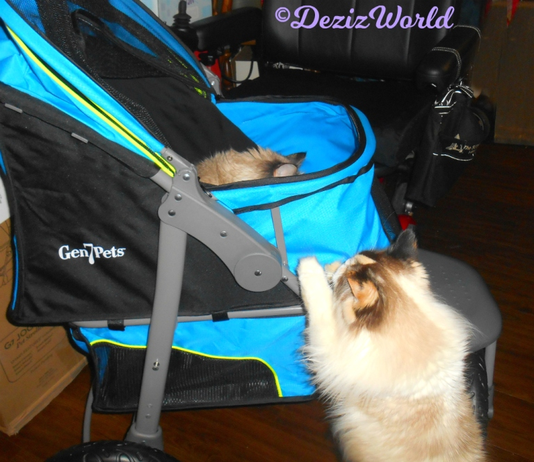Dezi checks out stroller while RAena stands on side looking up