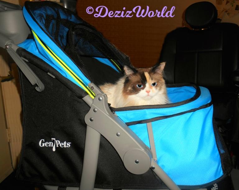 Raena sits in stroller