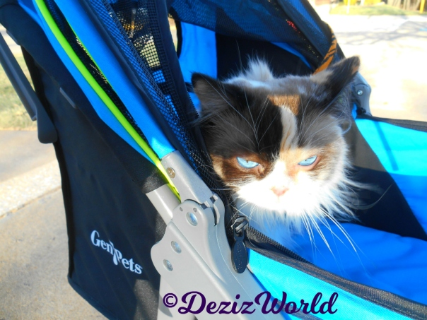 Close up of Raena's face in stroller