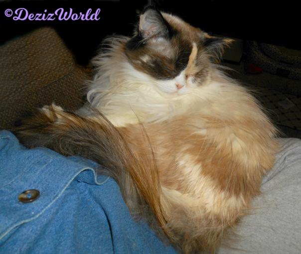 Raena lays sleeping in mommy's lap