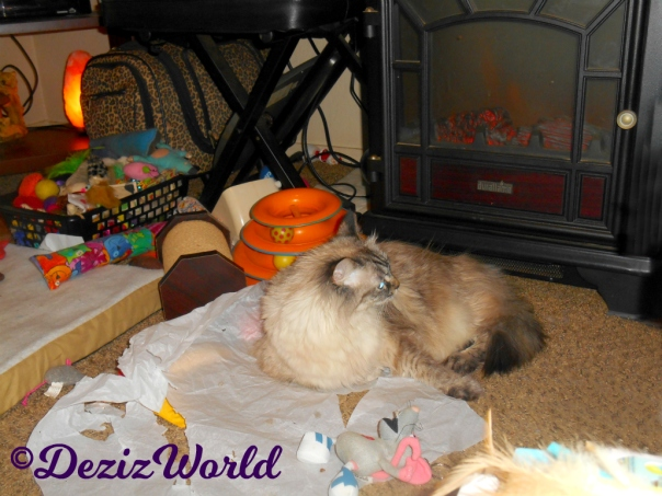 Dezi lays on tissue paper in front of fireplace