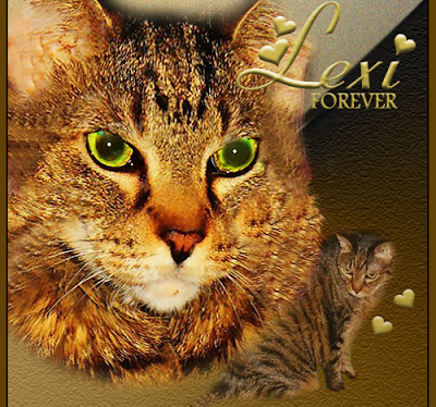 Service Cats: Ode to Lexi: Letter to Heaven