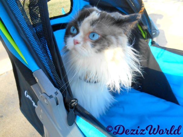 Raena's adorable face close up while sitting in stroller
