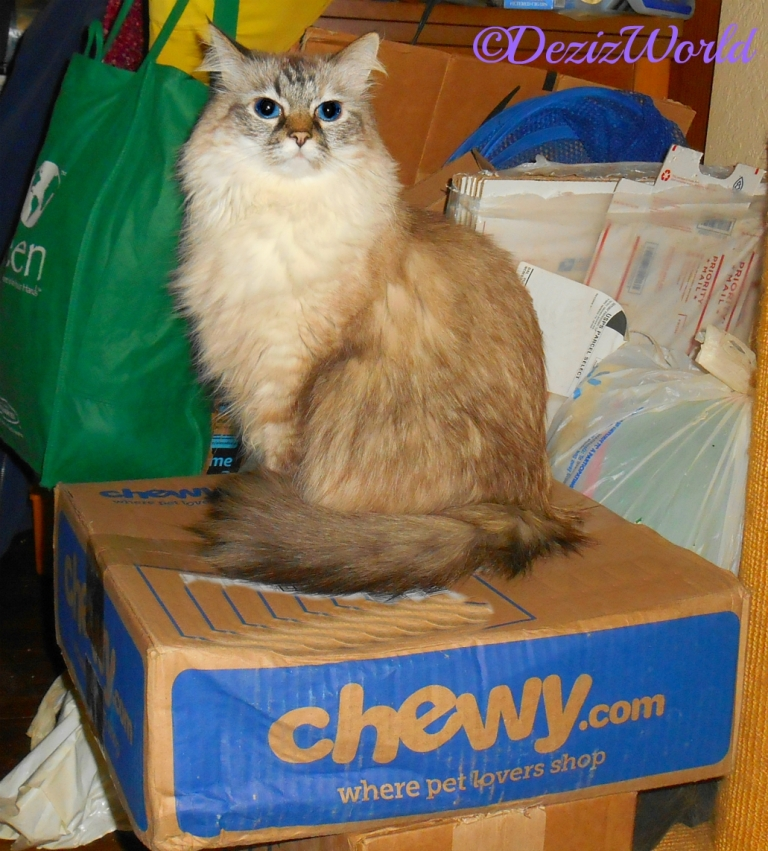Dezi sits on a Chewy box