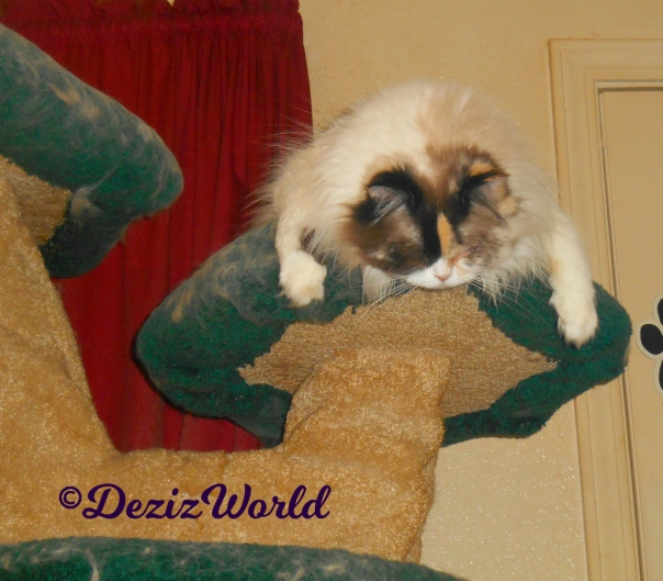 Raena sleeps while hanging over the edge of the liberty cat tree