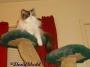 Chatting Cats: CuddlingKitties