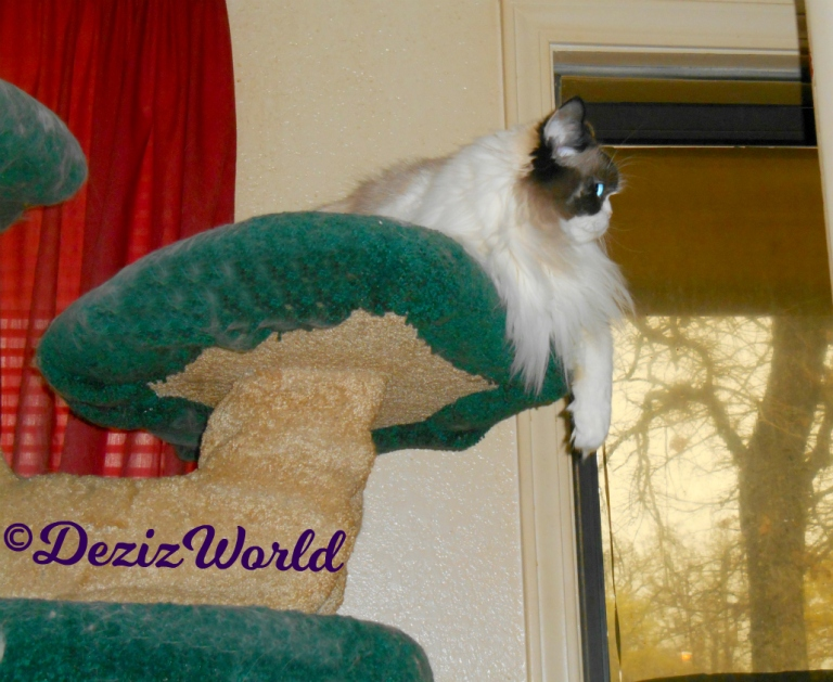Raena's profile while laying atop the liberty cat tree