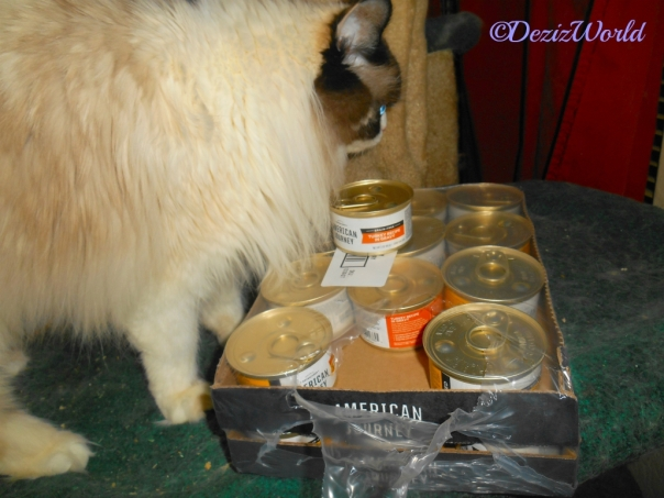 Raena stands over the American Journey cat food