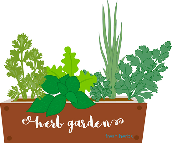 herb garden clip art