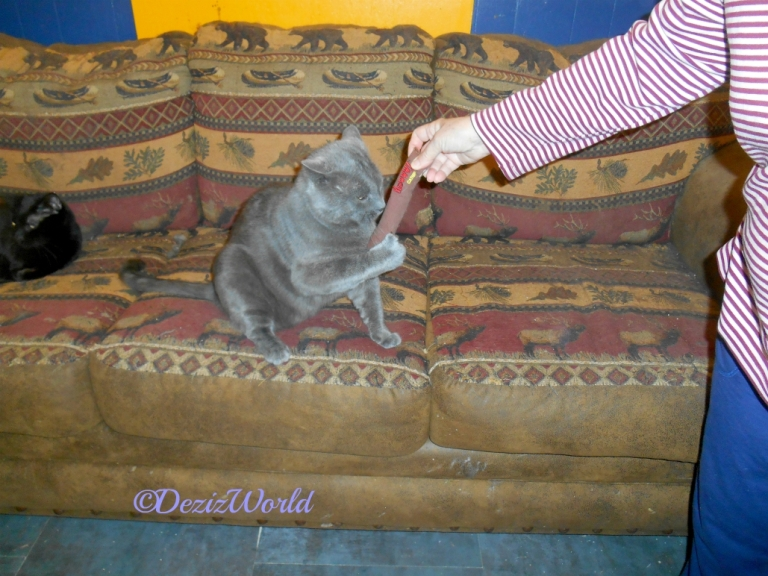 Kitty plays with Yeowww cigar the gurls shared