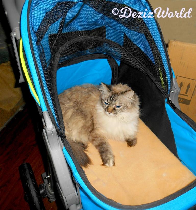 Dezi lays in the Gen7 stroller