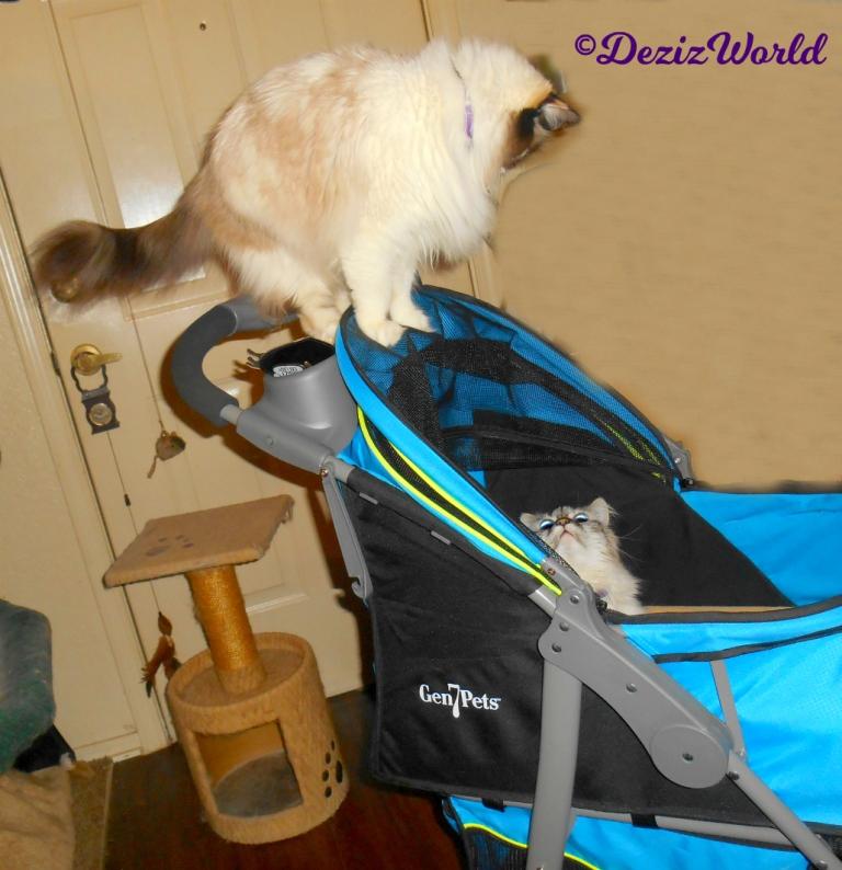 Dezi lays in Gen7 stroller looking up at Raena standing on handle
