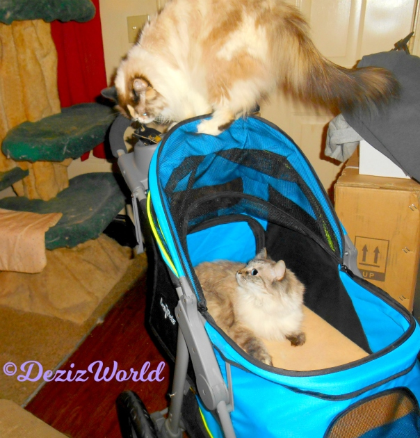 Dezi lays in Gen7 stroller looking up at Raena who stands on the handle