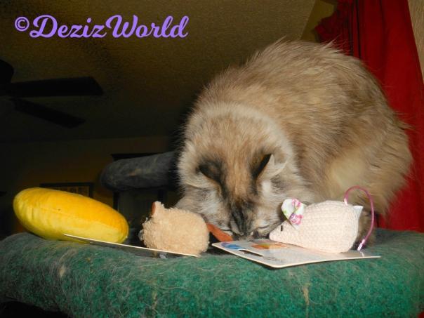 Dezi sniffs toys from the KitNip box