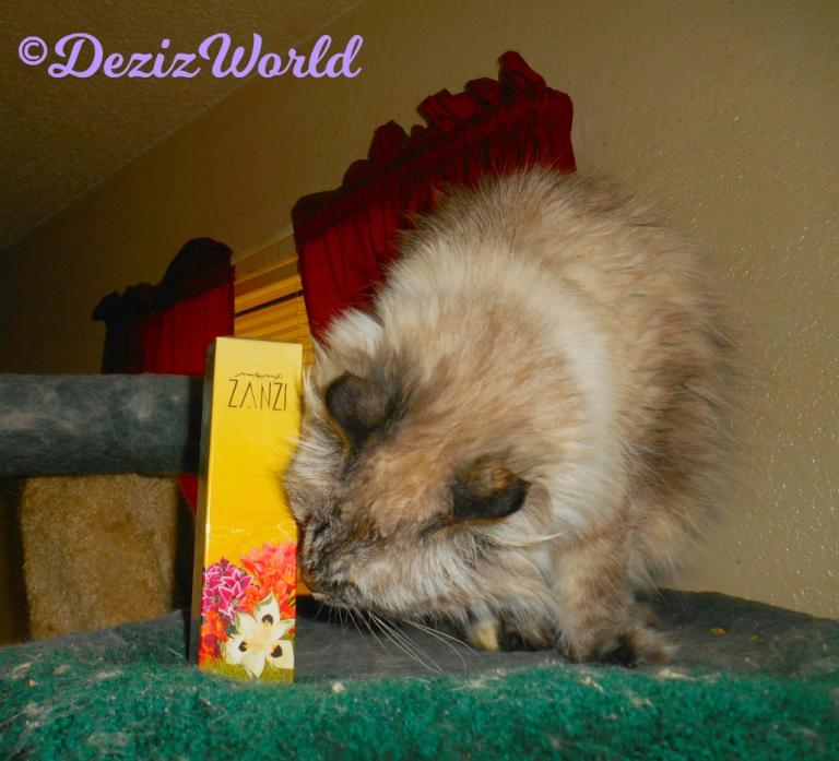 Dezi sniffs the Zanzi perfume gift from Cindy