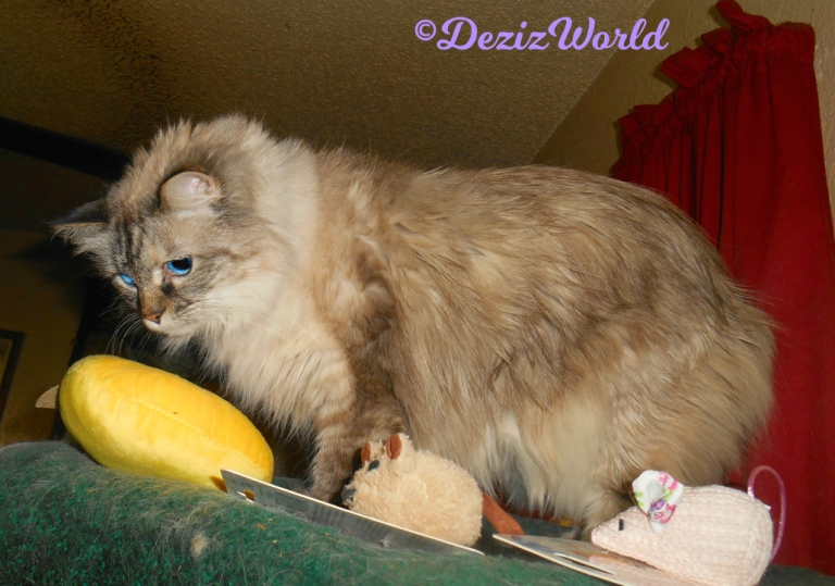 Dezi looks over the toys from the KitNip box