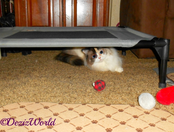 Raena lays under pet cot from KH