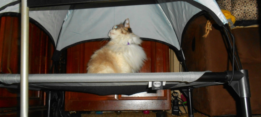 Chatting Cats: Cots, Canopies AndSpam