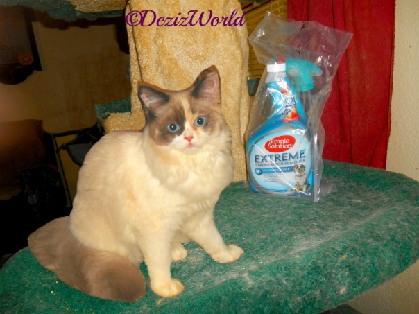 Raena sits beside the Simple Solution Stain and Odor Remover on the liberty cat tree