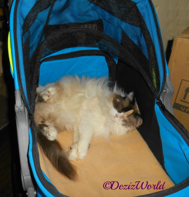 Raena lays sleeping in the Gen7 stroller
