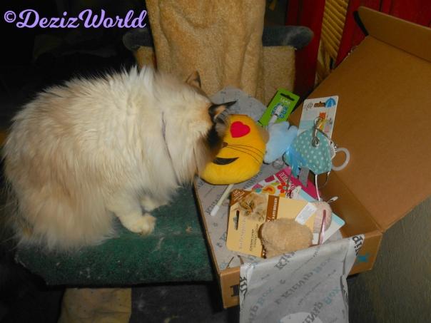 Raena checks out the the KitNip box