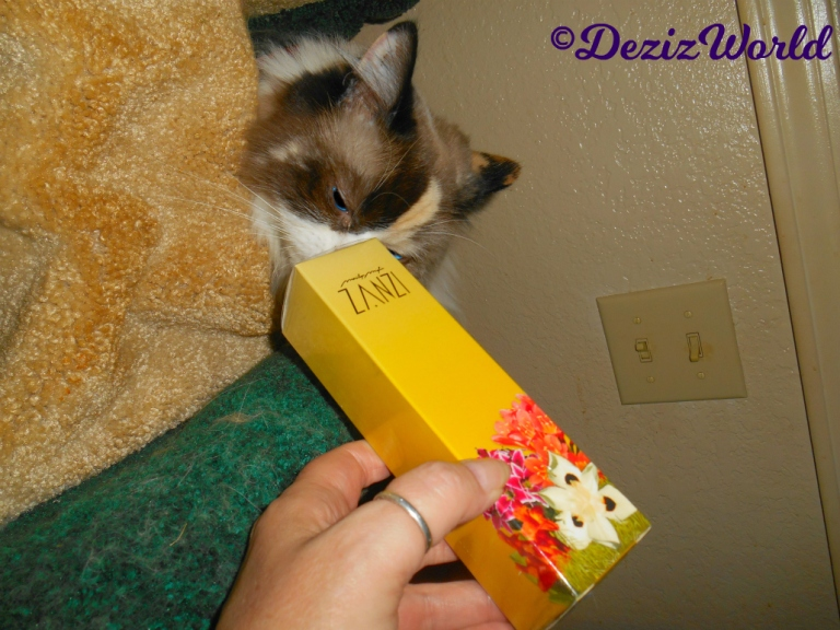 Raena peeks out from the liberty cat tree and sniffs the Zanzi perfume gift from Cindy