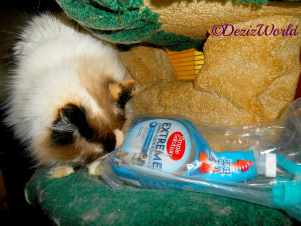 Raena sniffs the Simple Solution Stain and Odor Remover