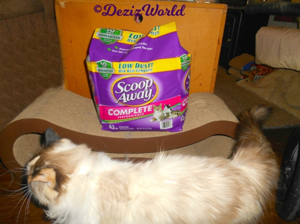 Raena walks by Scoop Away Complete Clay litter