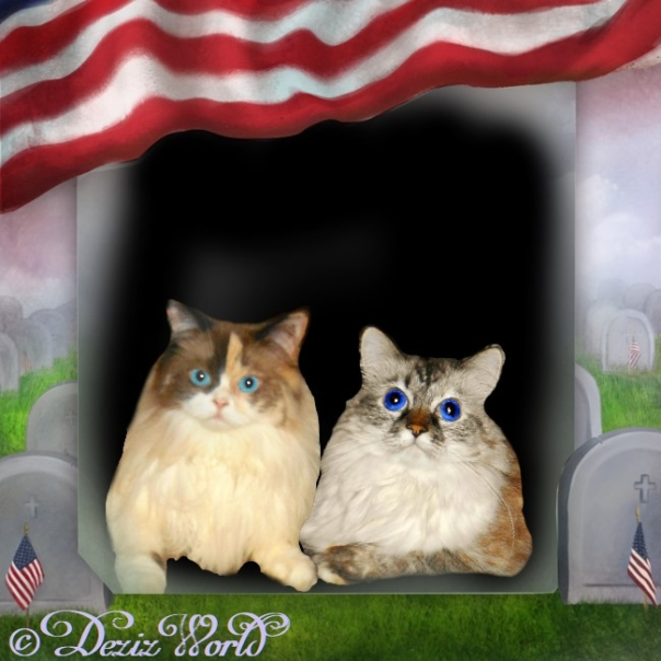Dezi and Raena in a memorial day frame with the American flag and headstones