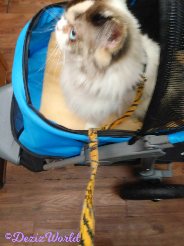 Raena sits in stroller at the vet's office